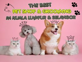 The Best Pet Shop and Grooming In Kuala Lumpur & Selangor picture