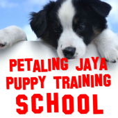 My Puppy Training business logo picture